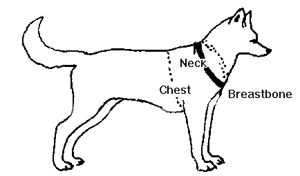 measure your dog for a shoulder harness